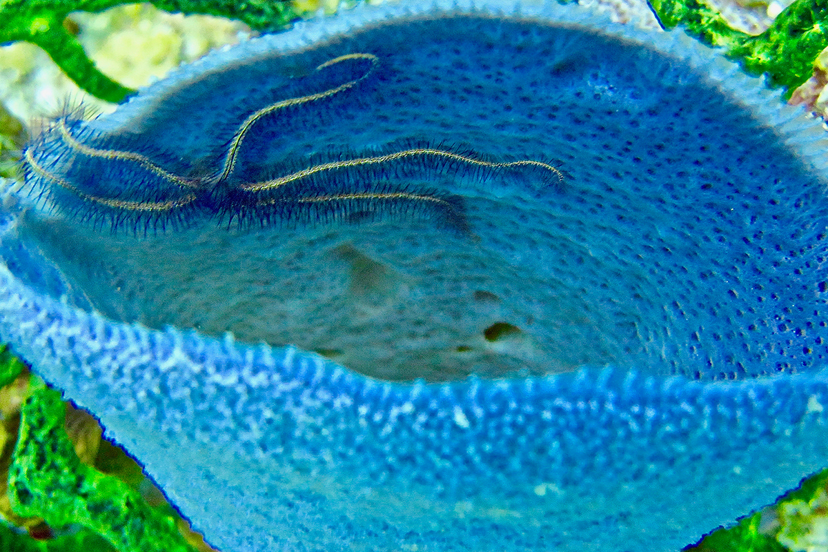 """""""Fish Bowl """" ~  Cuba"""