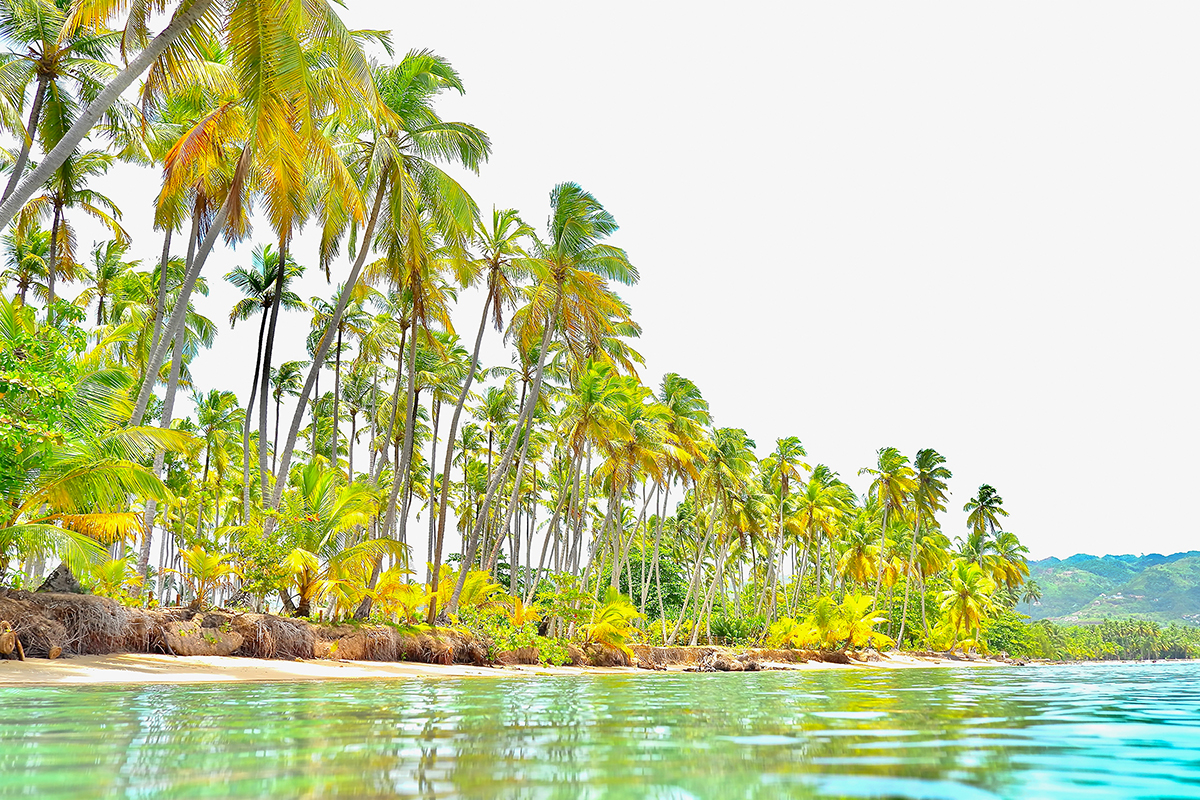 """Rich Fringe"" ~  Samana, Dominican Republic"