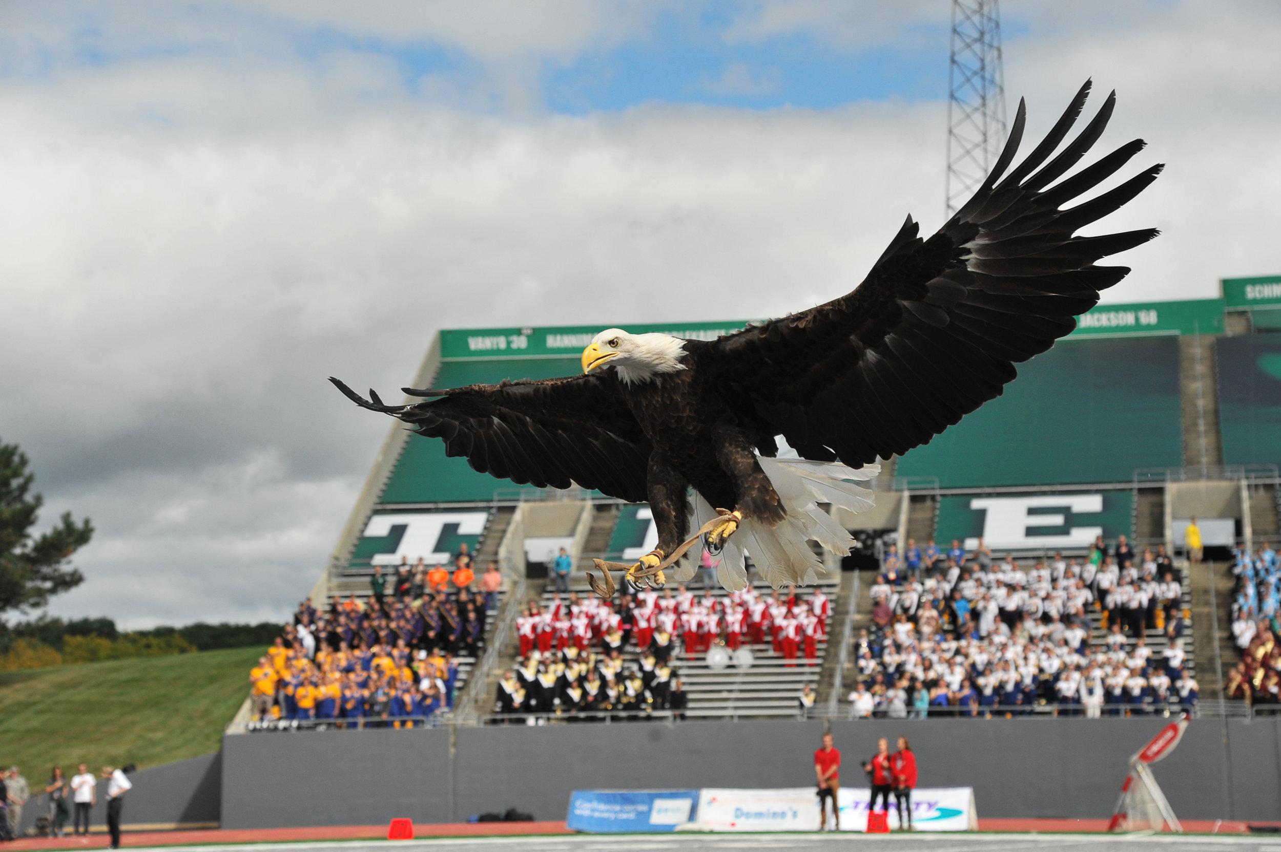 BAEA flying emu in for landing.jpg