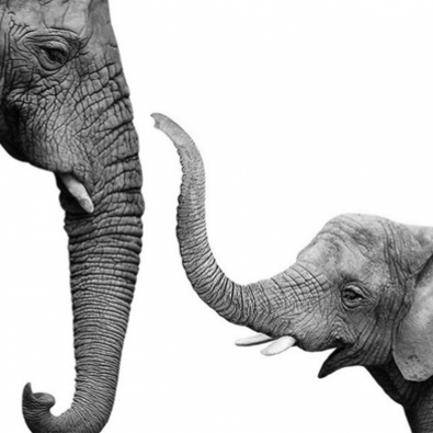 Elephants_4.png