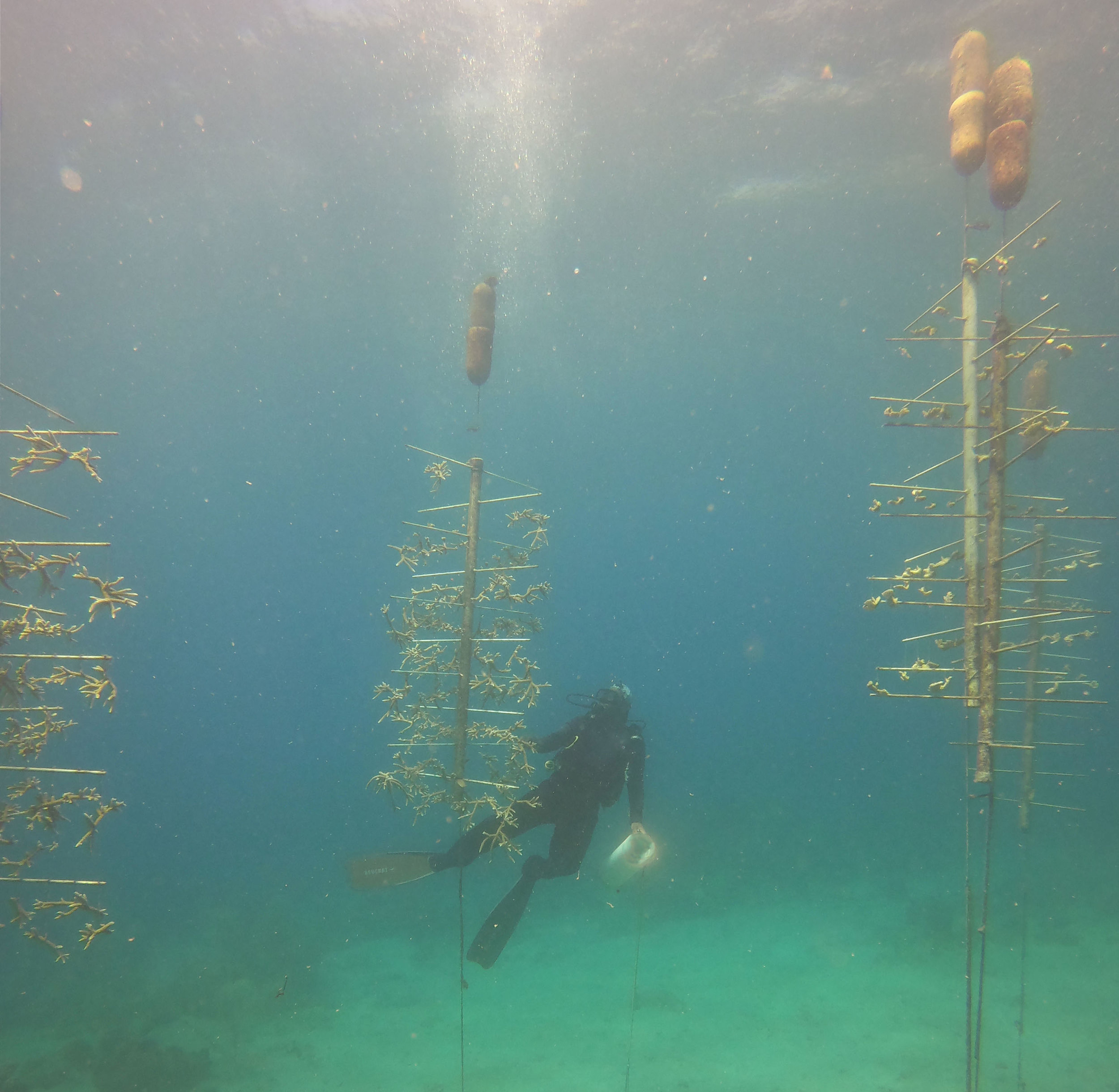 Chester in the coral nursery