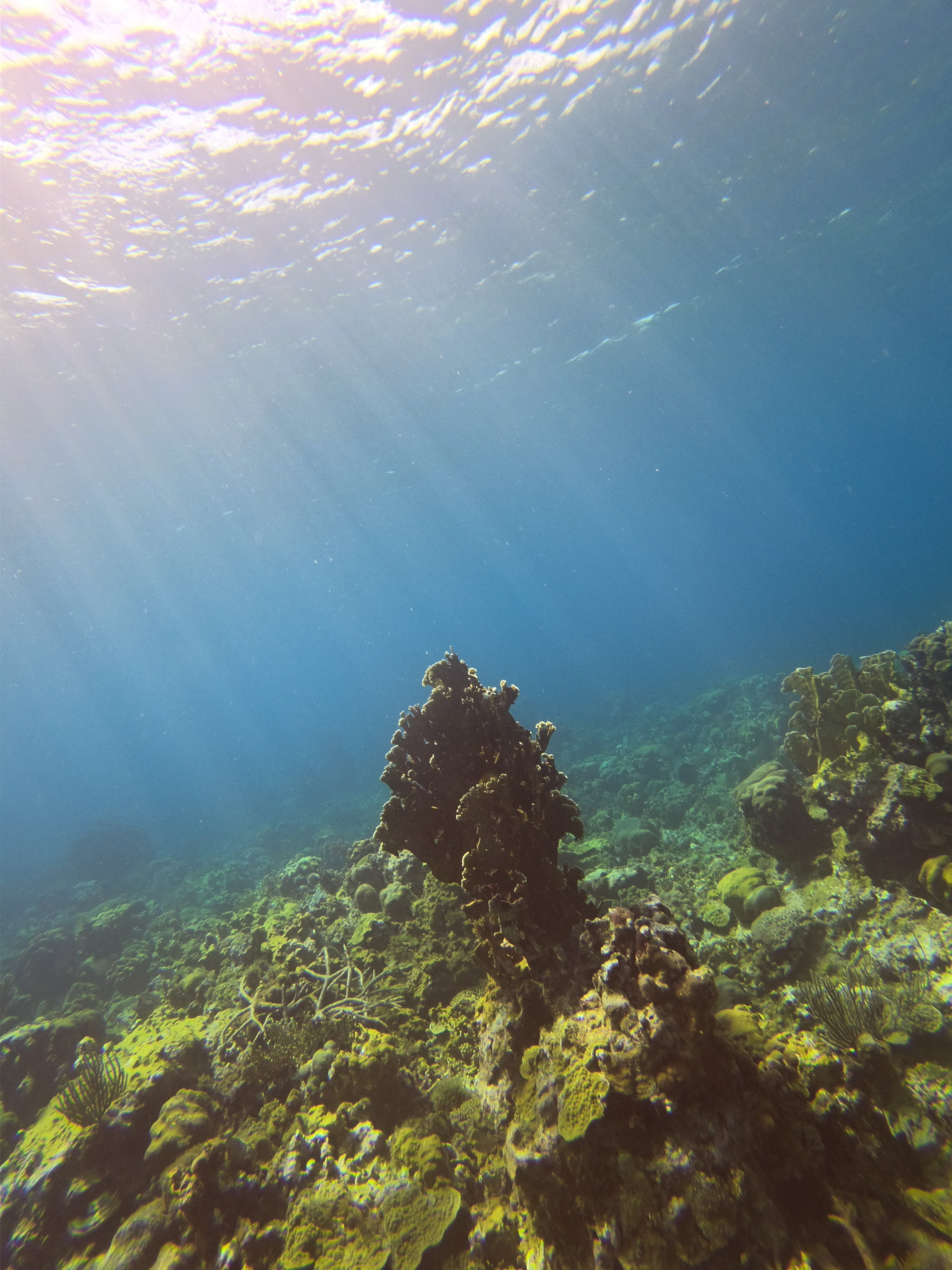 Round Hill Coral Reef