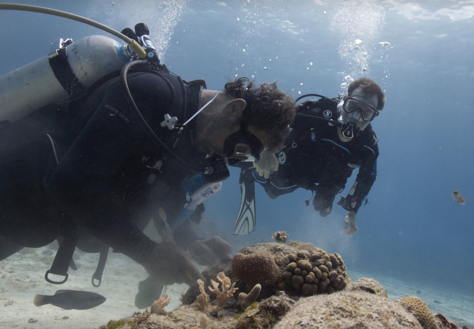 German outplanting a coral fragment onto the reef while I watch. Photo Courtesy of Carlo Sanchez
