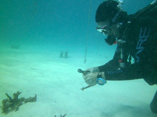 Frederick preparing coral fragments for tree hanging. (c) Stephen Kroll
