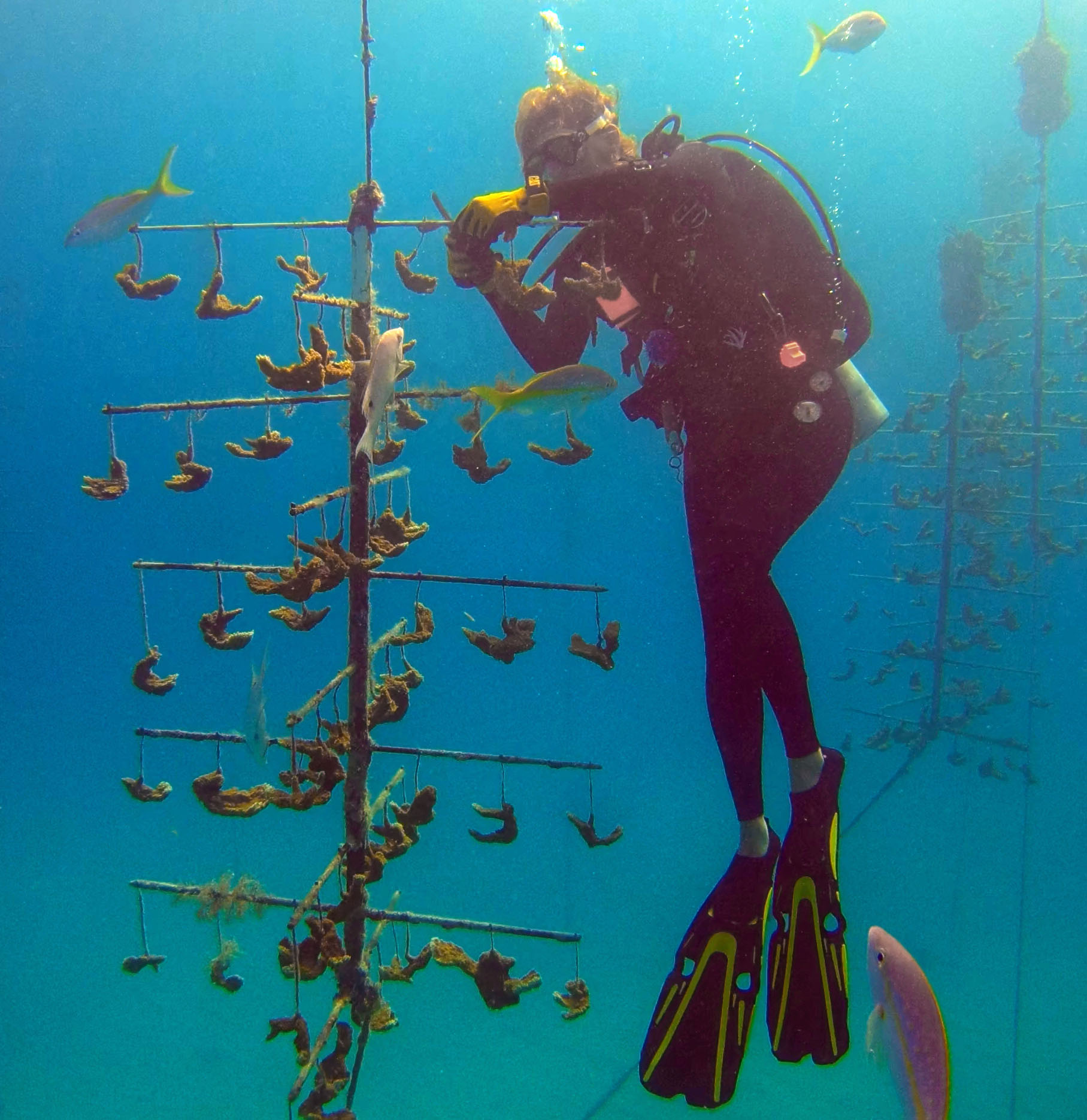Roxane Boonstra, CRF's Recreational Dive Manager