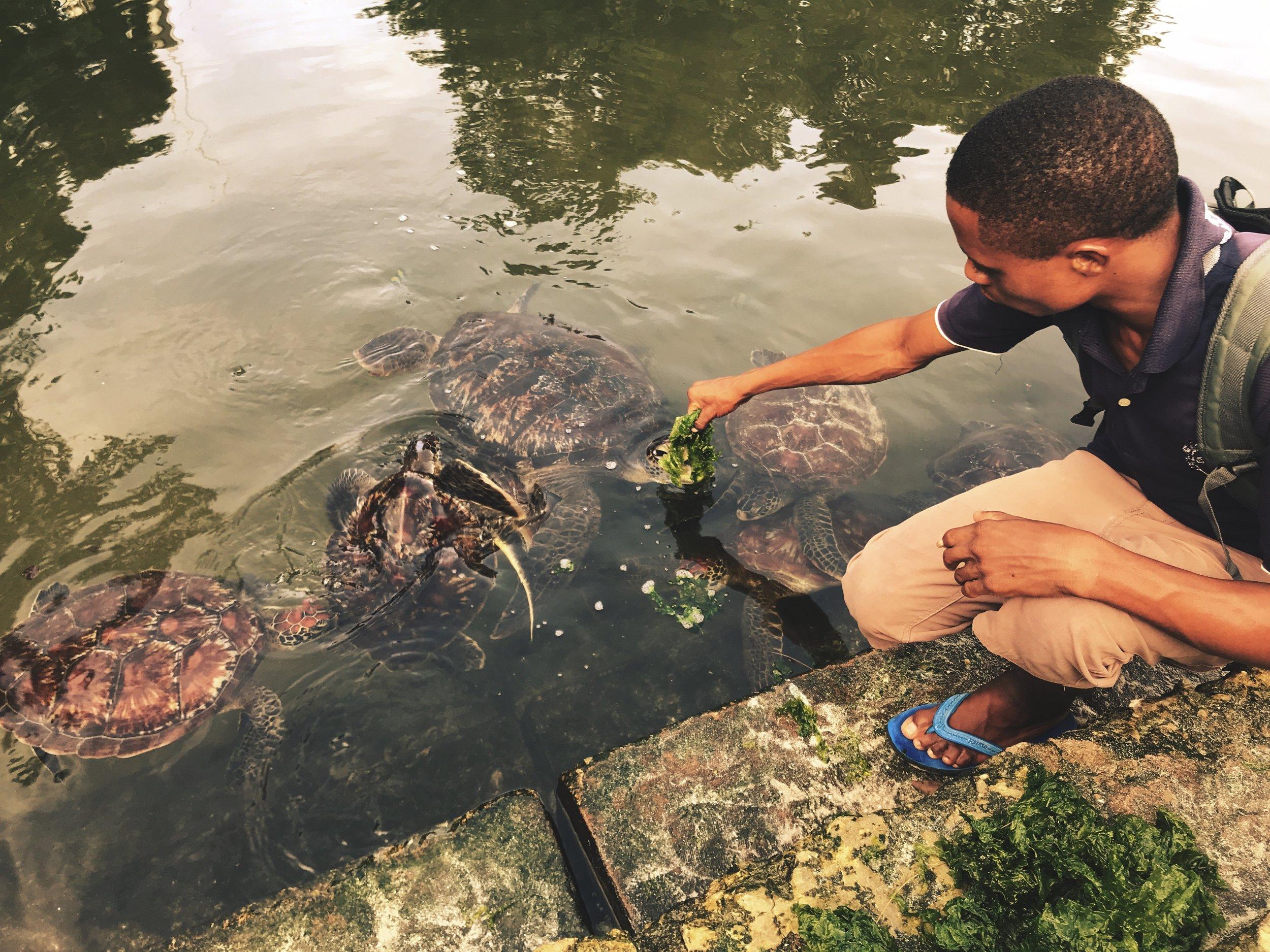 Moses feeding the turtles