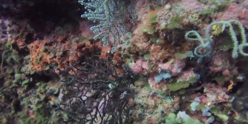 Copy of Coral Wonderland