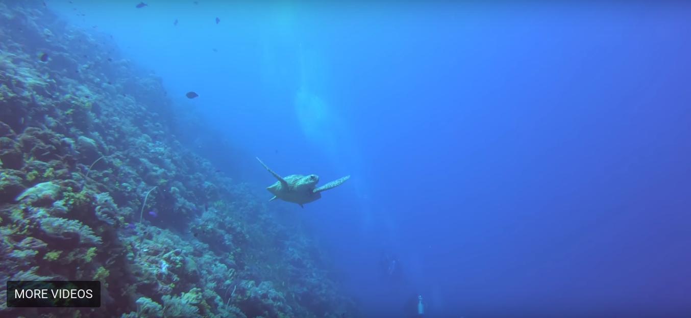 Copy of Sea Turtle Swim - Pelelui Wall