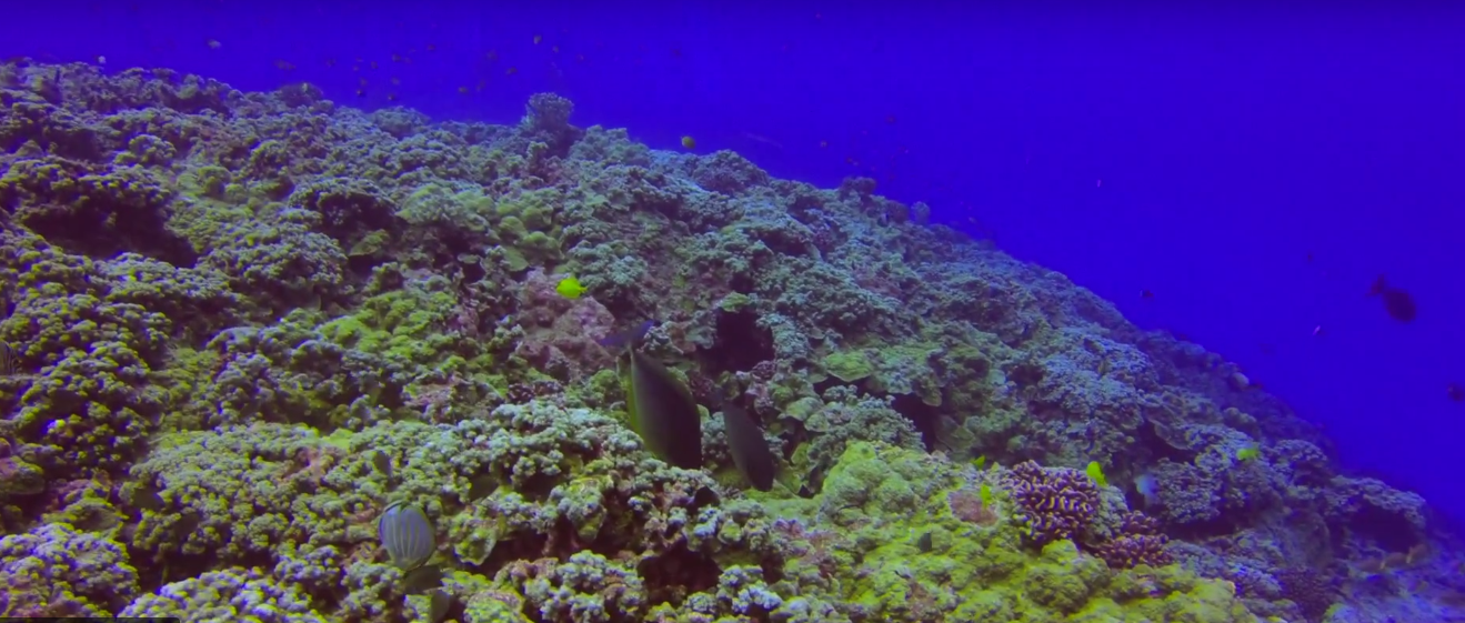 Coral Fish Forest