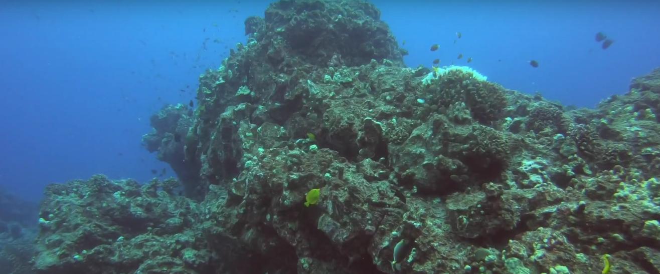 Tiny Fish Coral