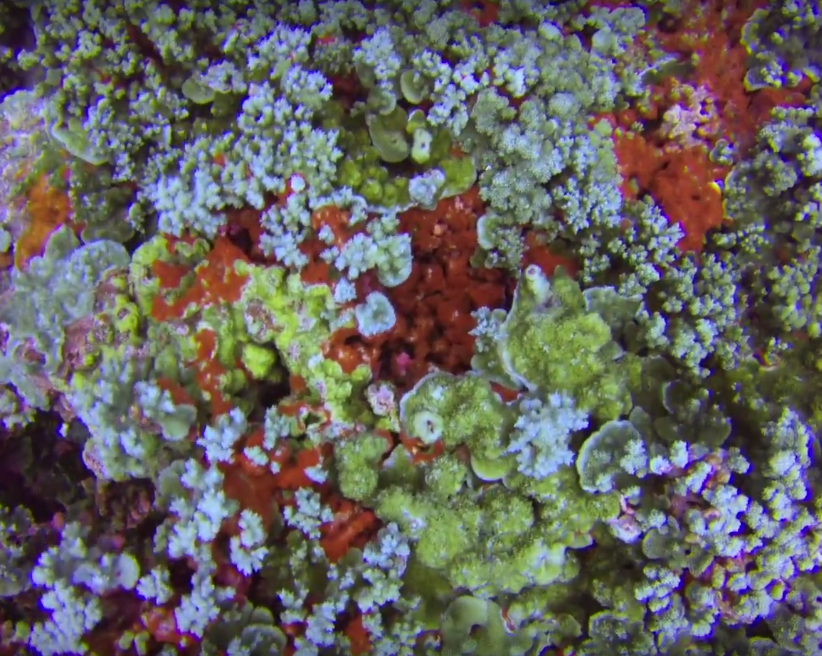 Coral Overview