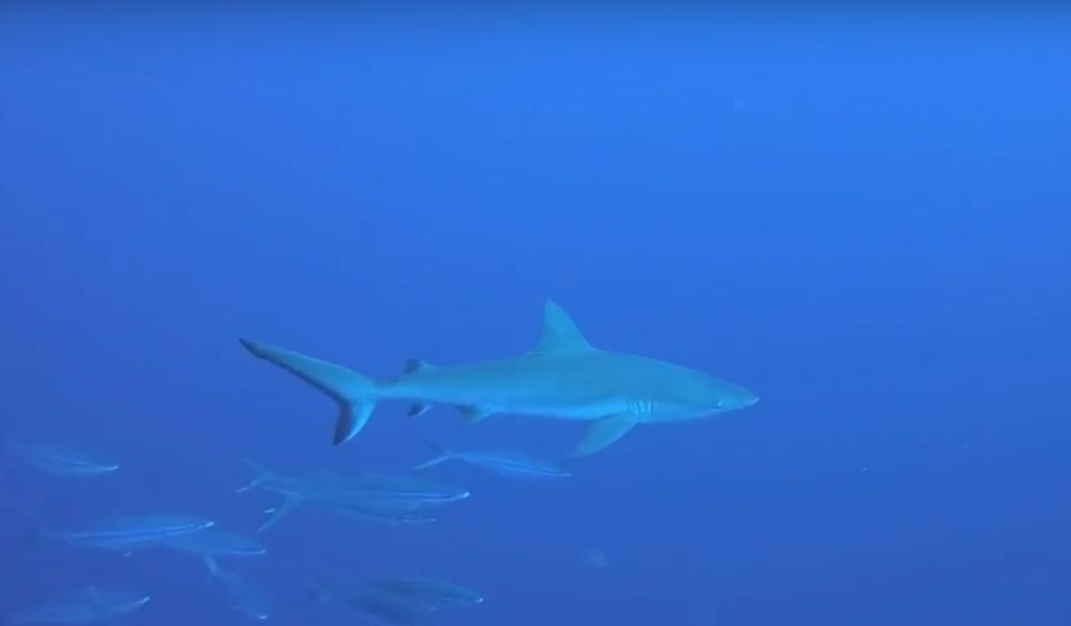 Copy of Sharks!!!