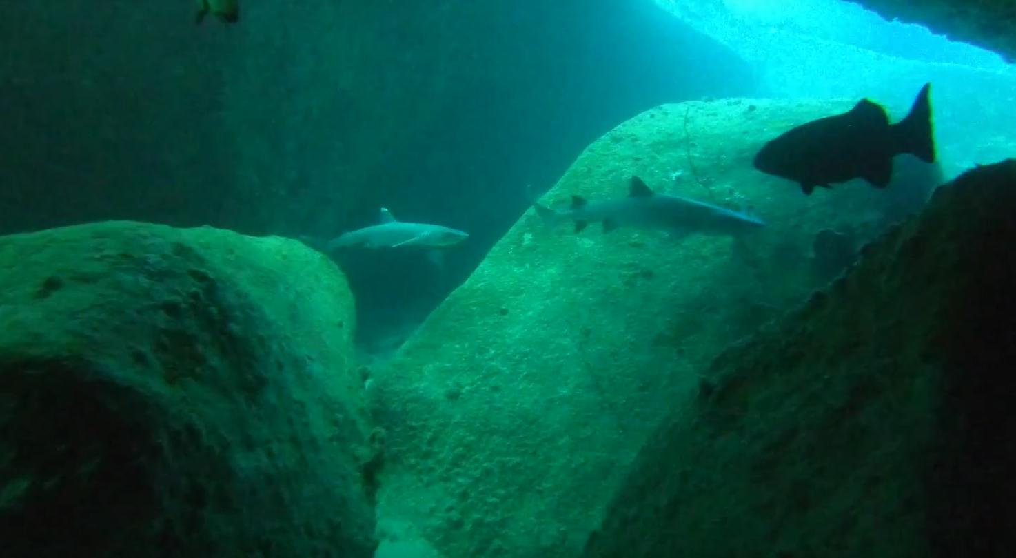 Whitetip Sharks in the Boulder Maze