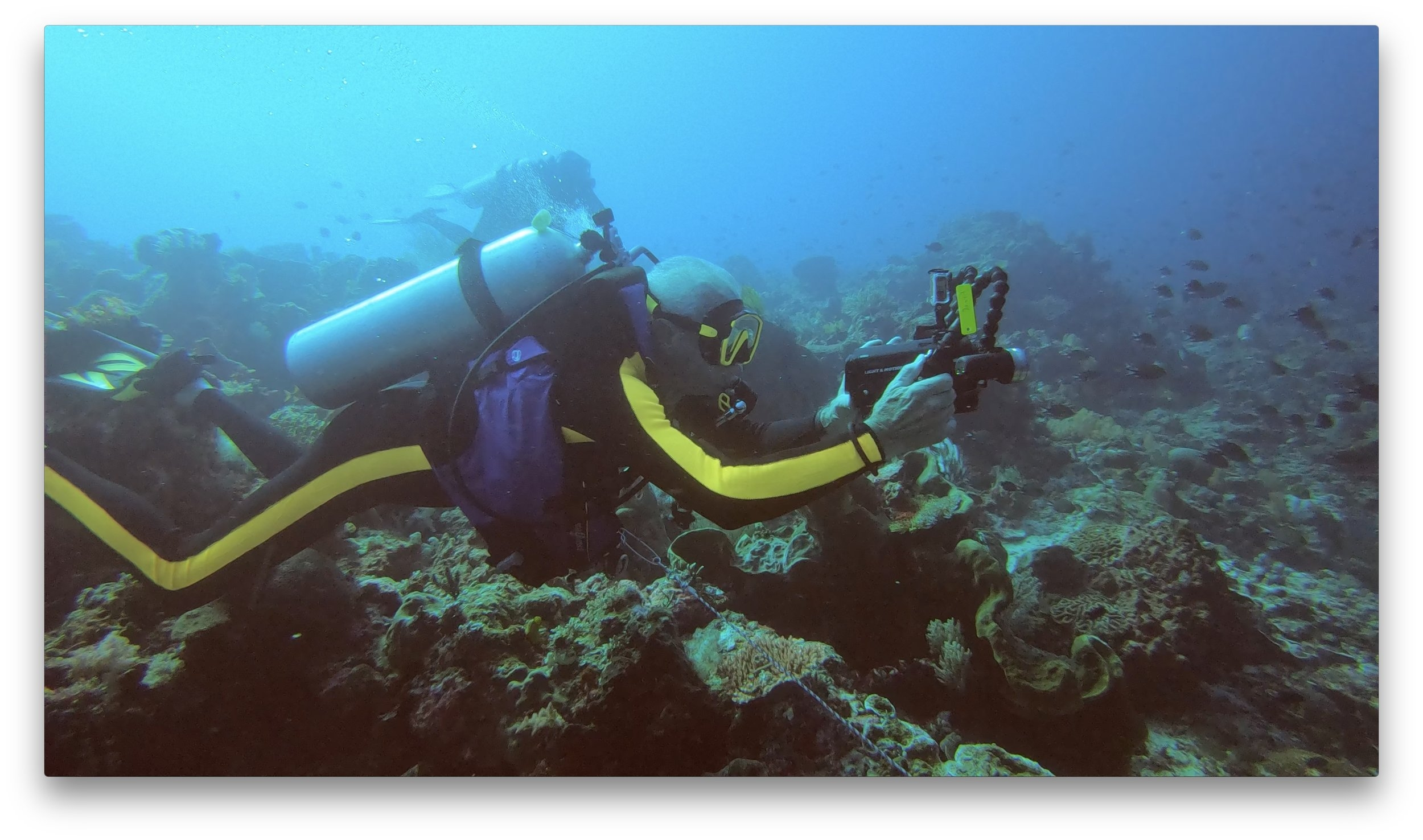 CORAL REEF RESTORATION OPPORTUNITIES - Make Your Difference