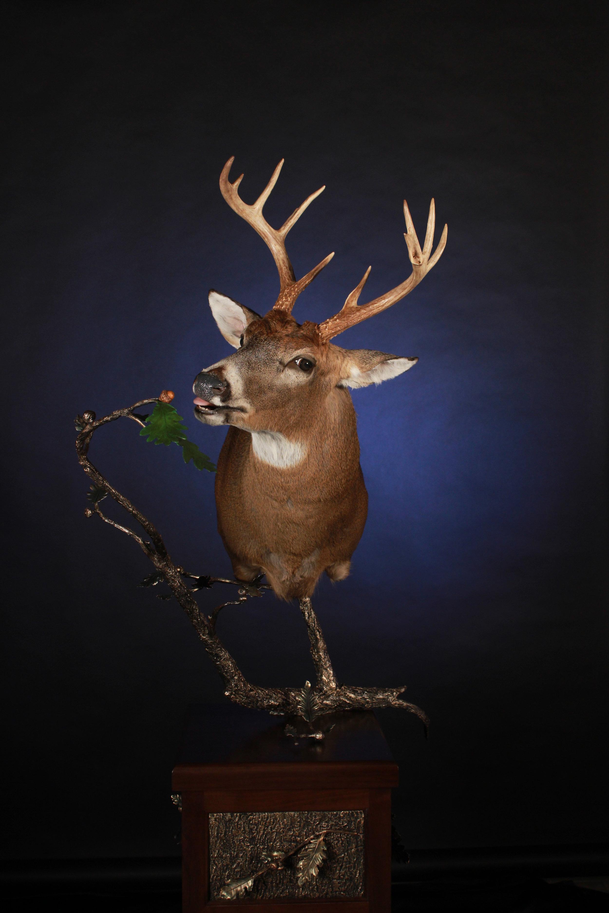 My Deer.jpg