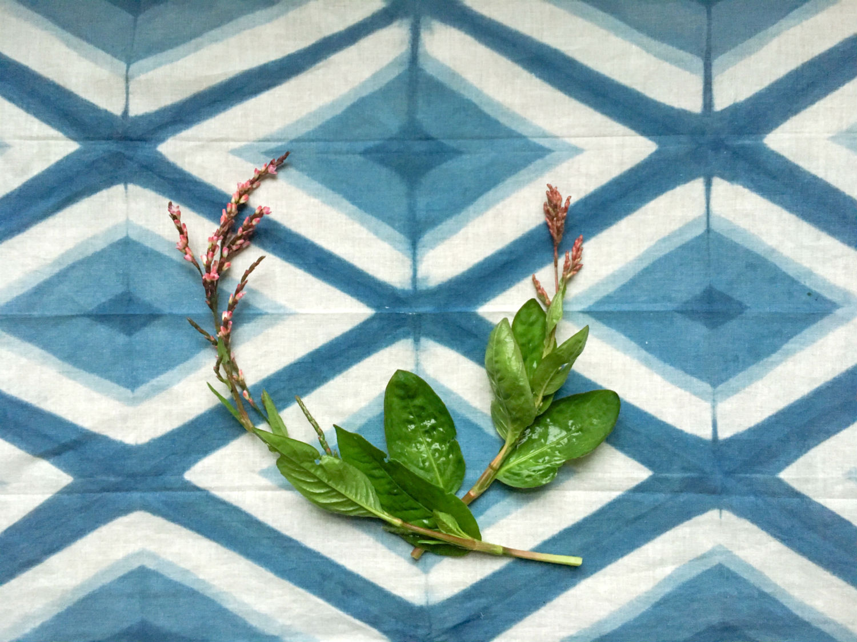 Indigo leaves and dyed fabric