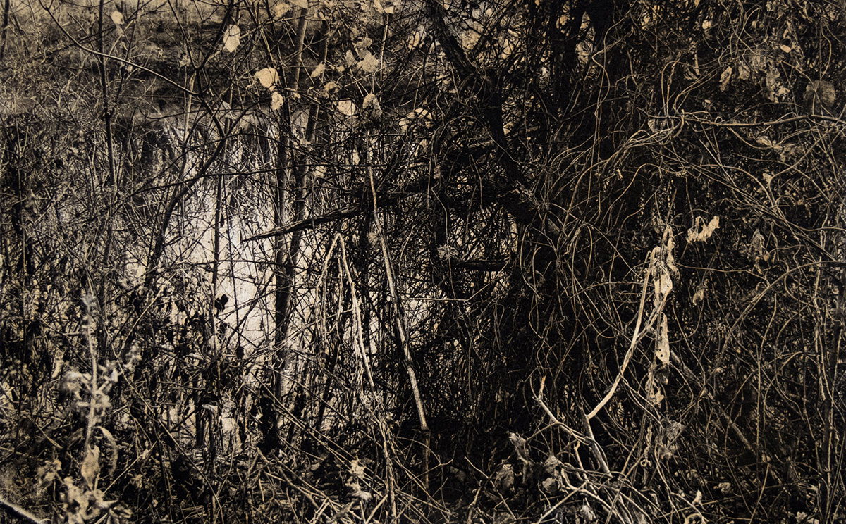 Pictured above: John Pearson,  St. Croix Thicket  (detail), polymer photogravure, 2016