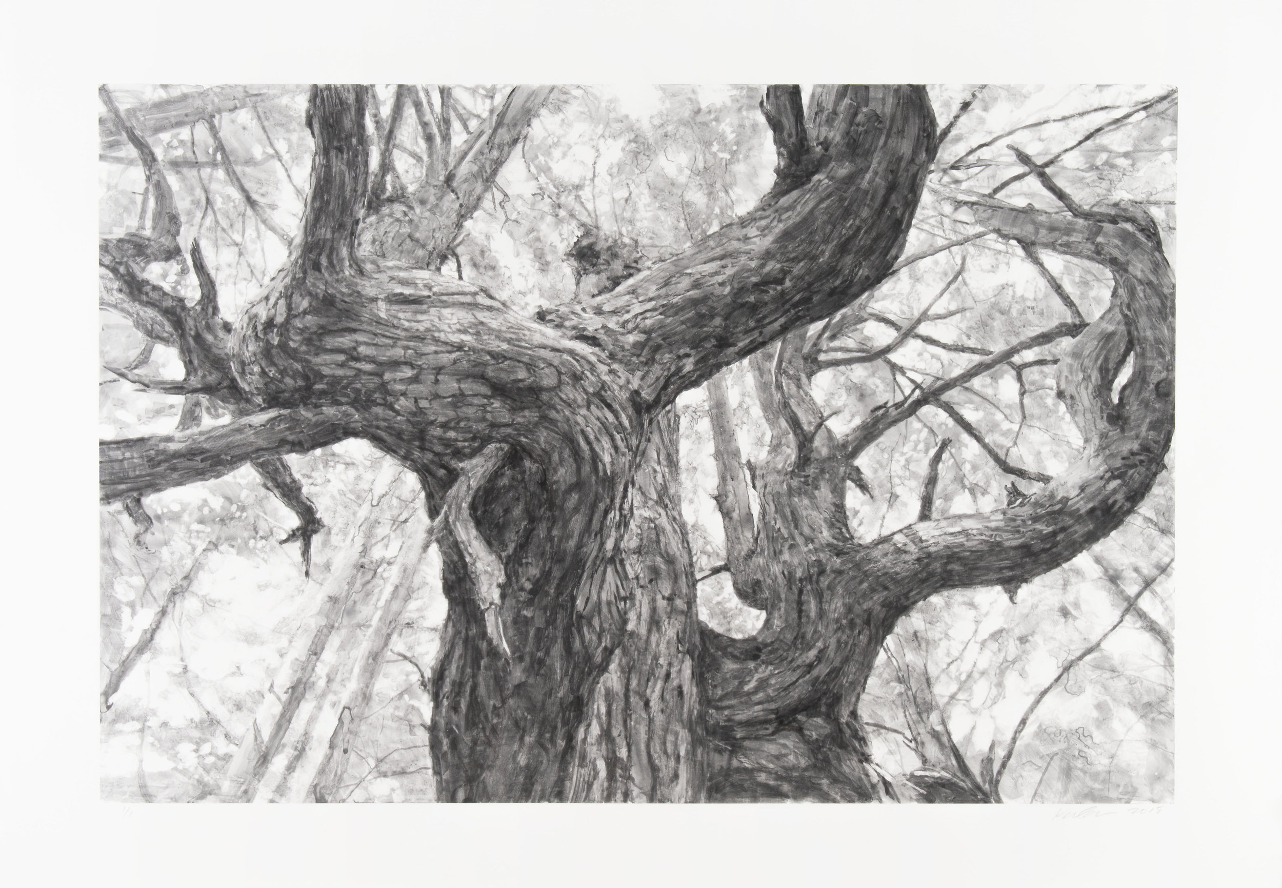 Tree Near Second Beach by Michael Kareken 2018 Unique | Watercolor Monoprint | 24 x 36 | 28.5 x 40