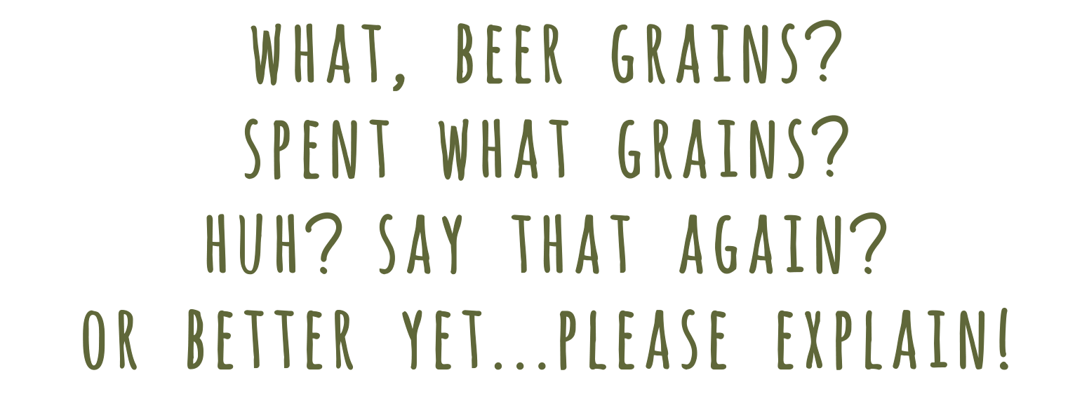 what beer grains_text.png