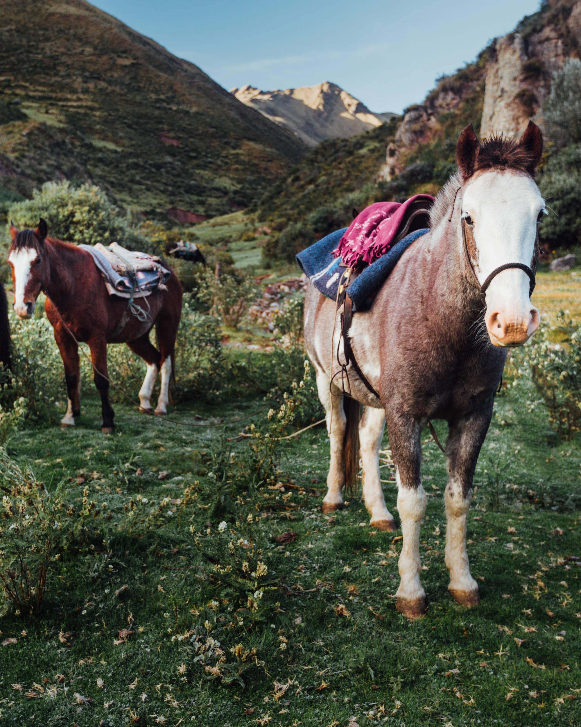 Porters Horses on Trek to Machu Picchu