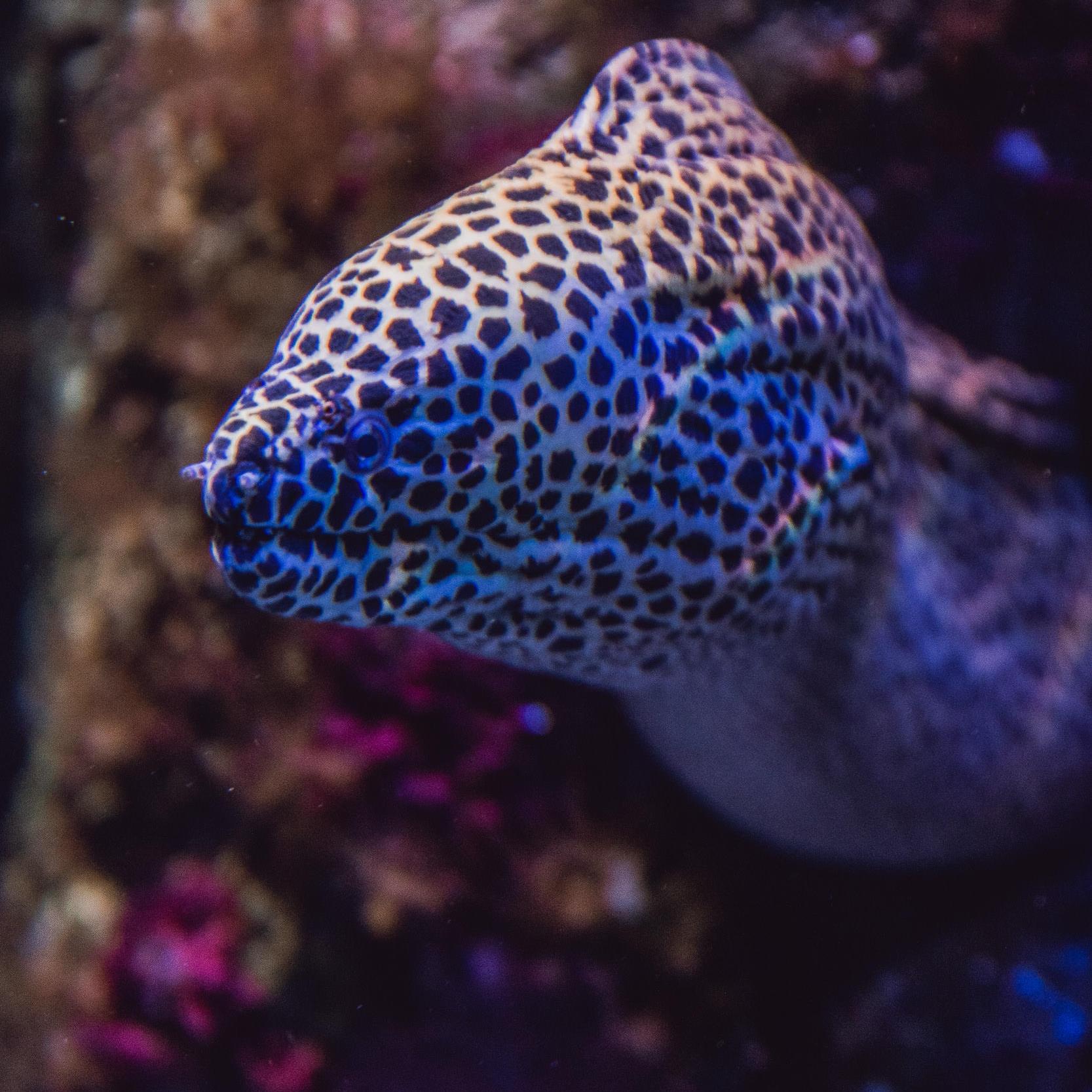 San Sebastian Aquarium Eels