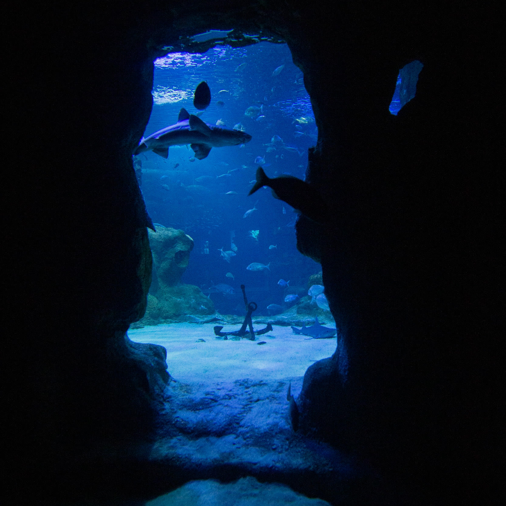 San Sebastian Aquarium Sharks