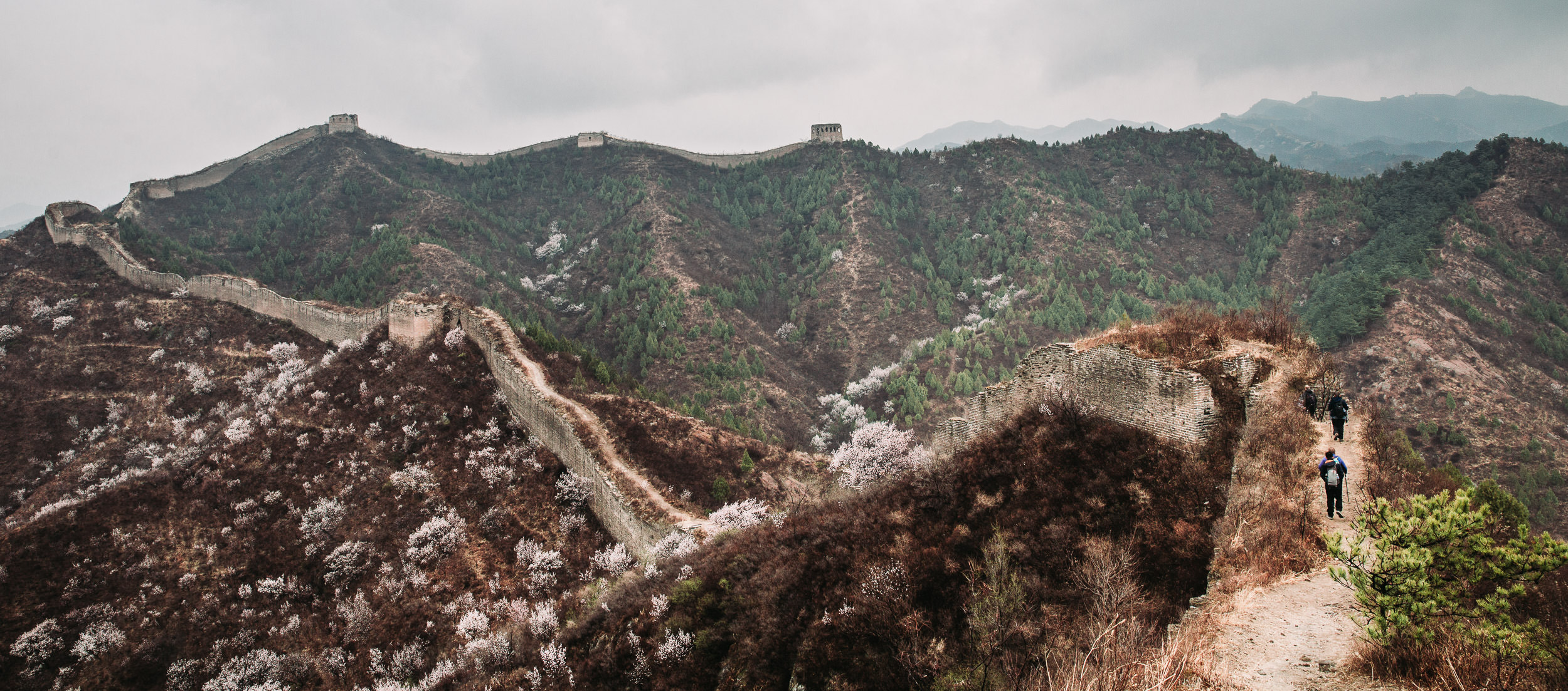 The Gubeiku Leg of the Great Wall in Springtime is only just coming to life in early April. White apricot blossoms are some of the first of the season and line the path.