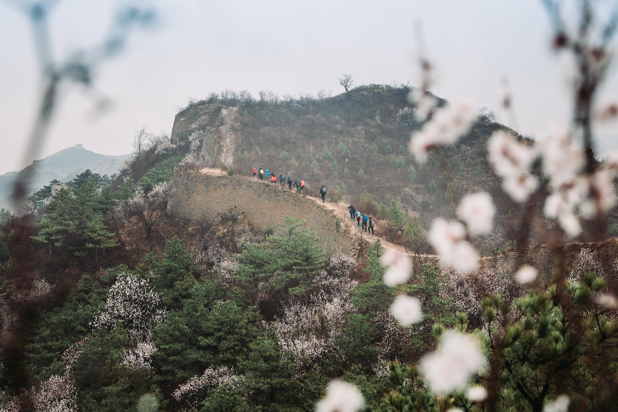 Much of the Gubeiku section of the Great Wall is slowly being reclaimed by nature. Forests line it for most of the way and the path is often quite treacherous.