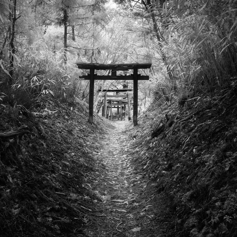 Torii gates, Koyasan