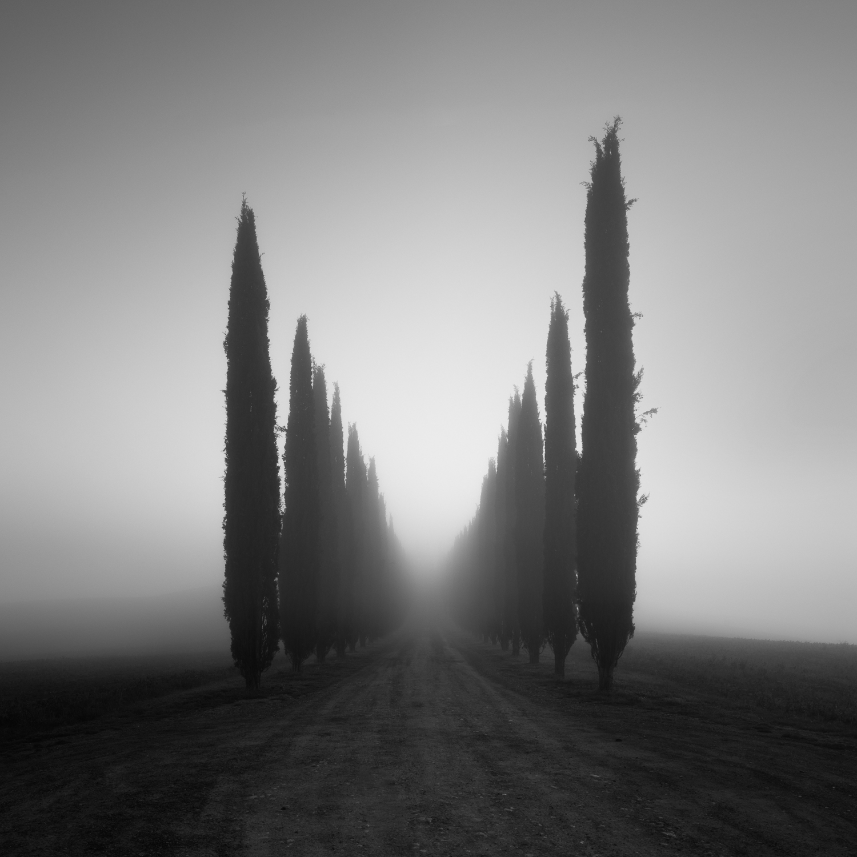 The Avenue II