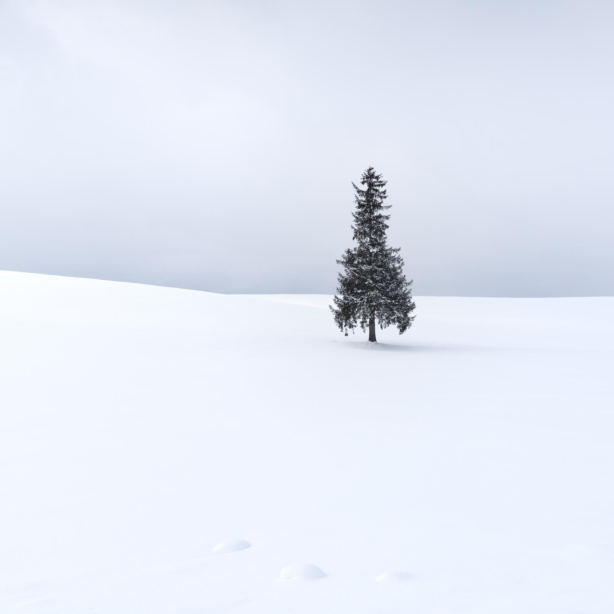 Biei Christmas Tree