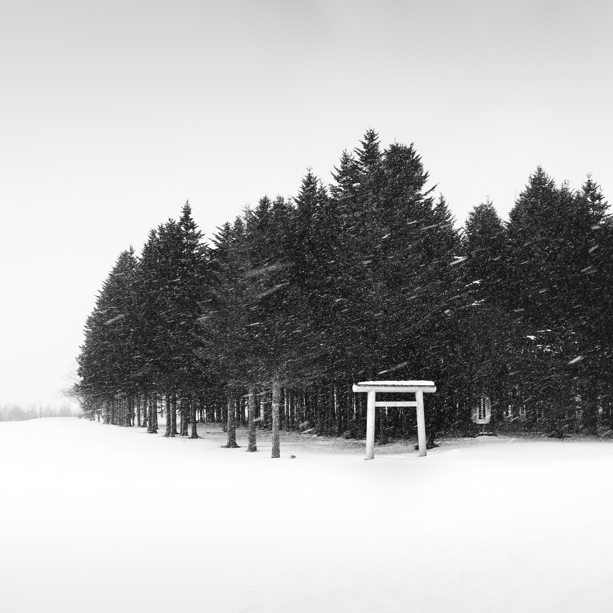 Forest Torii