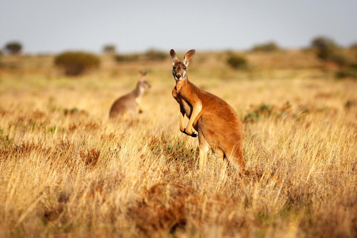 The-Kimberley-Australian's-Hidden-Outback.jpg