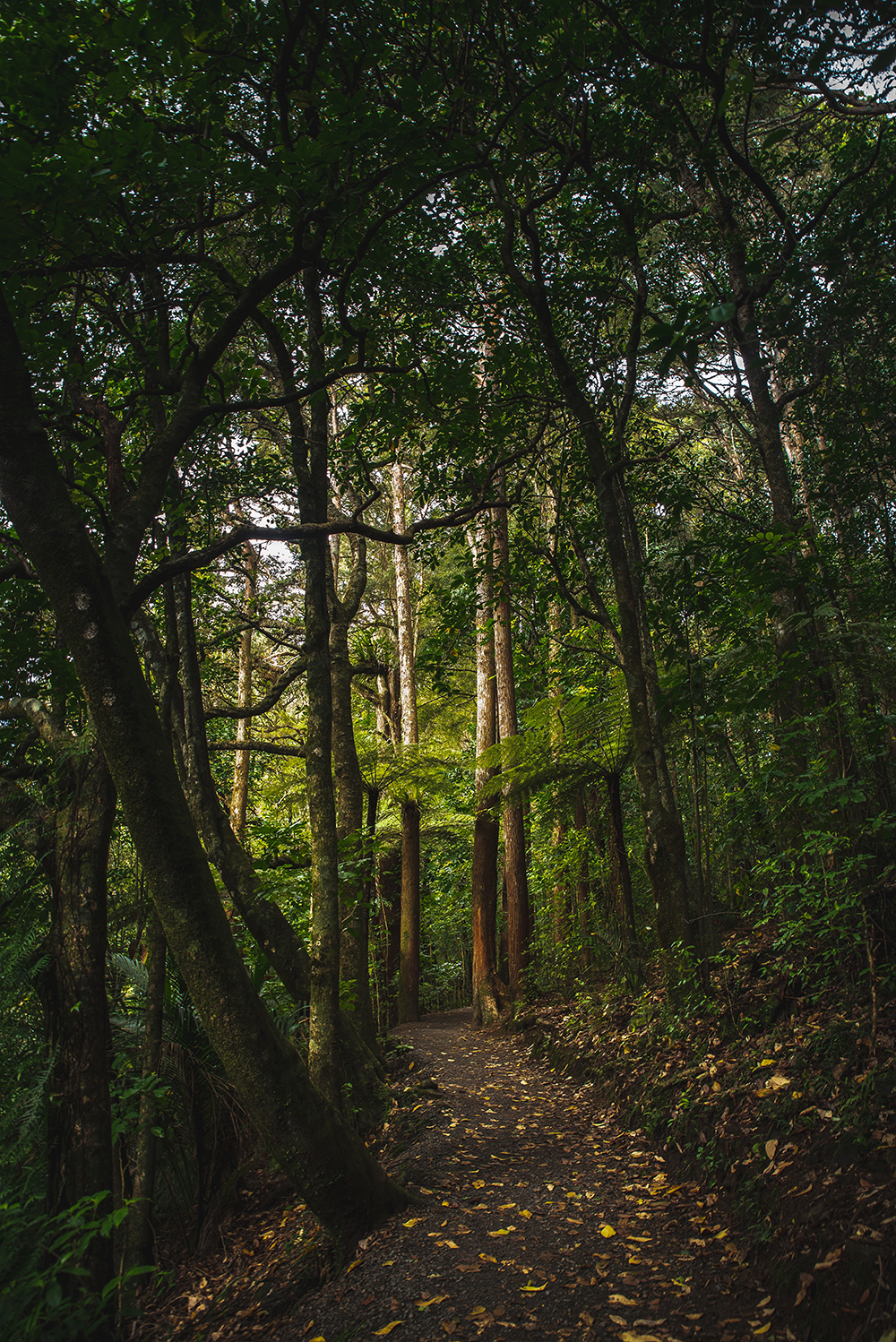 A typical forest - these can be found throughout New Zealand.