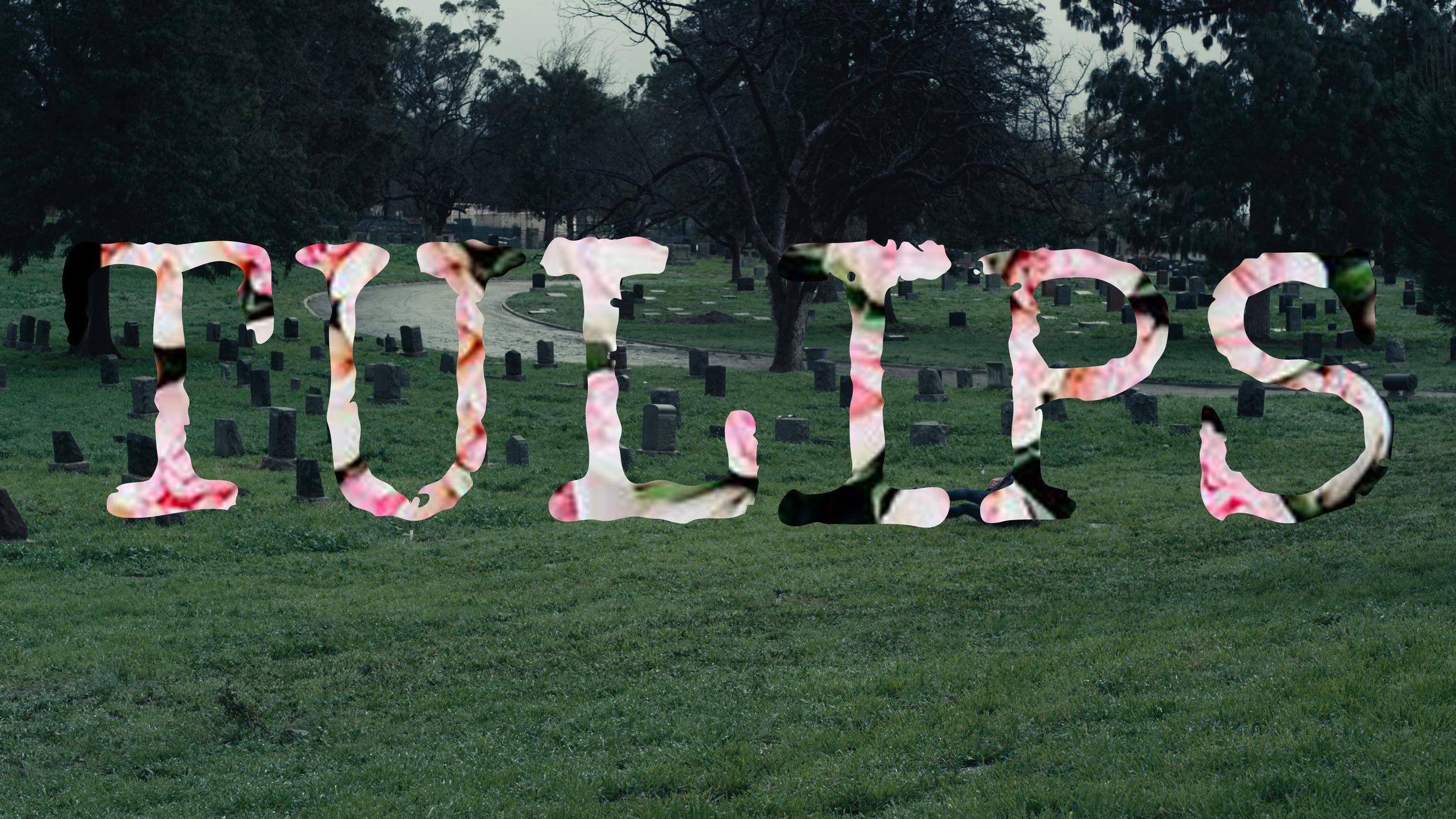 Tulips Poster 3.jpg
