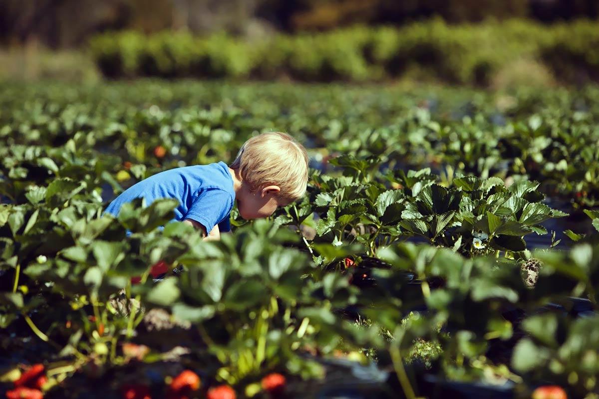 hillwood-berry-farm-45575-2.jpg