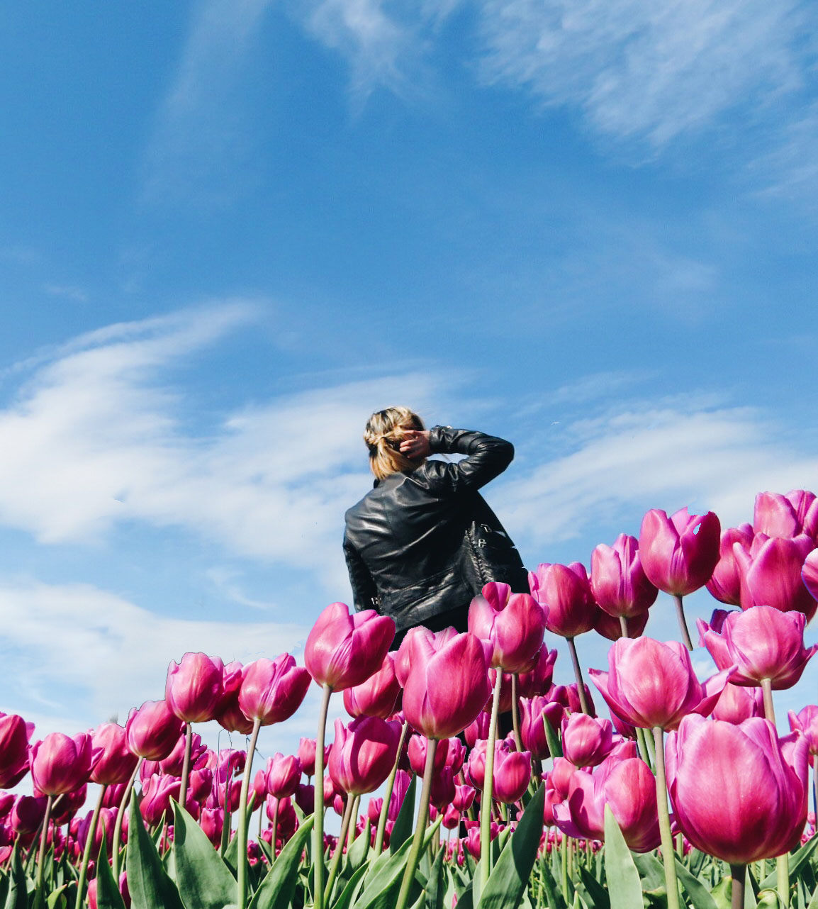 Visiting the tulip fields during their limited season at Lisse and  Keukenhof