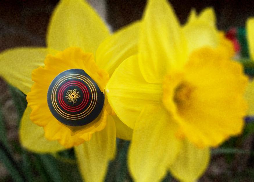 spring-rolls.png
