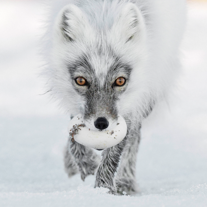 Arctic Treasure  by Sergey Gorshkov