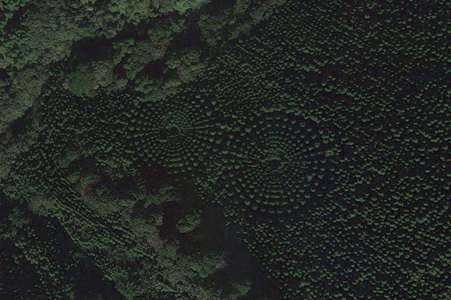 forest-crop-circles-miyazaki-experiment-nature-japan-CROPCIRCLESJP0219.jpg