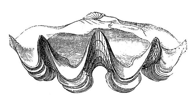 Mariners-oyster-(web).jpg