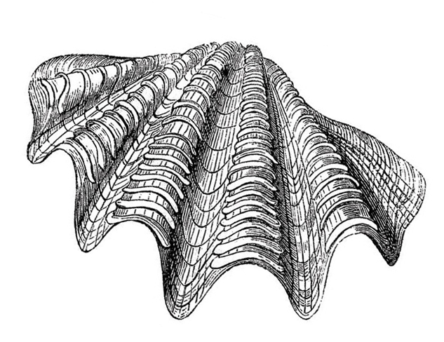 oyster-2-(web).jpg