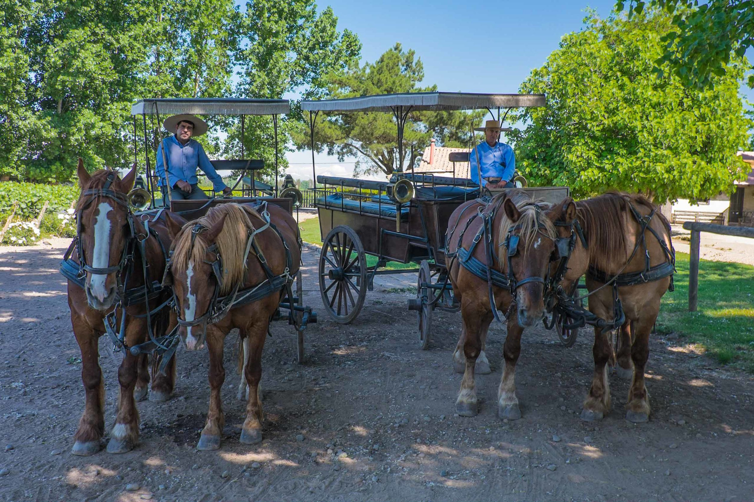 Horse carts, Viu Manent |  ©John Szabo (published by Jacqui Small)