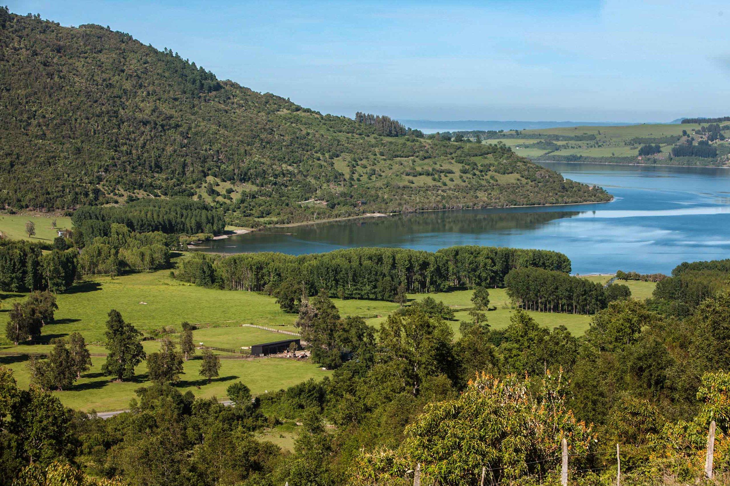 Lago Ranco vineyard, Casa Silva   ©John Szabo (published by Jacqui Small)