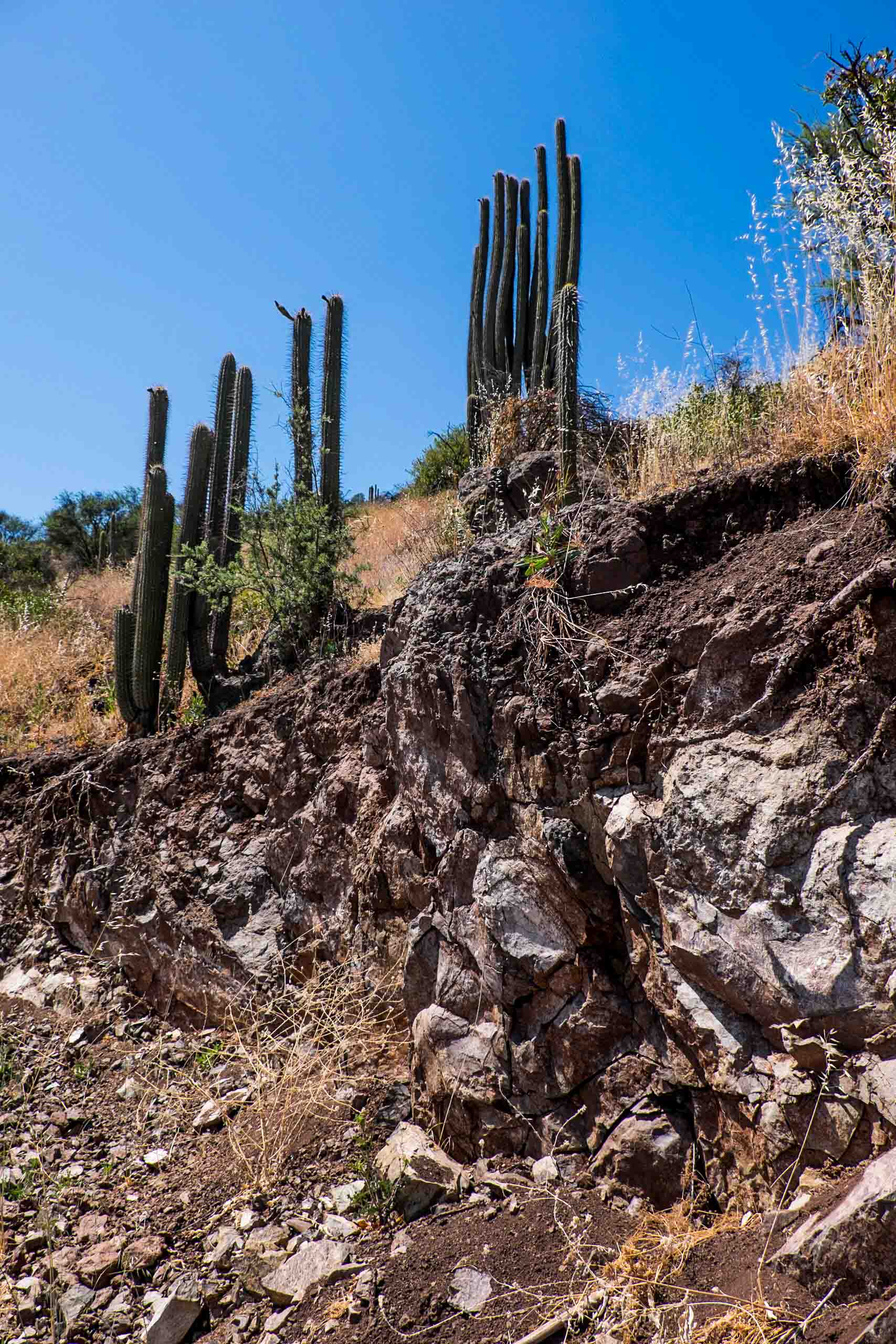 Santa Carolina Piedras Pizzaras vineyard, exposed volcanics |  ©John Szabo (published by Jacqui Small)
