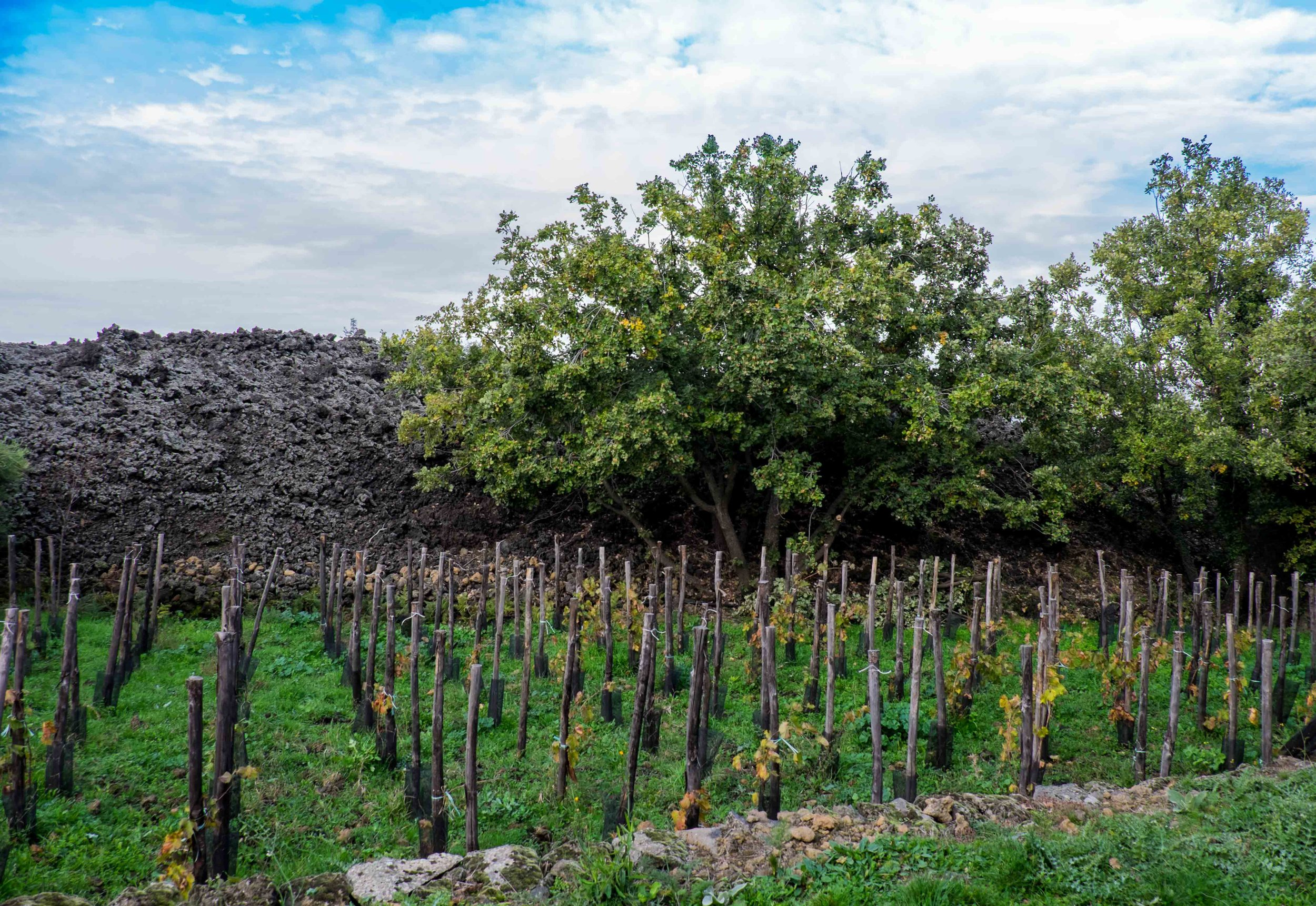 Vineyards spared by 1981 lava flow on Mt. Etna |  ©John Szabo (published by Jacqui Small)