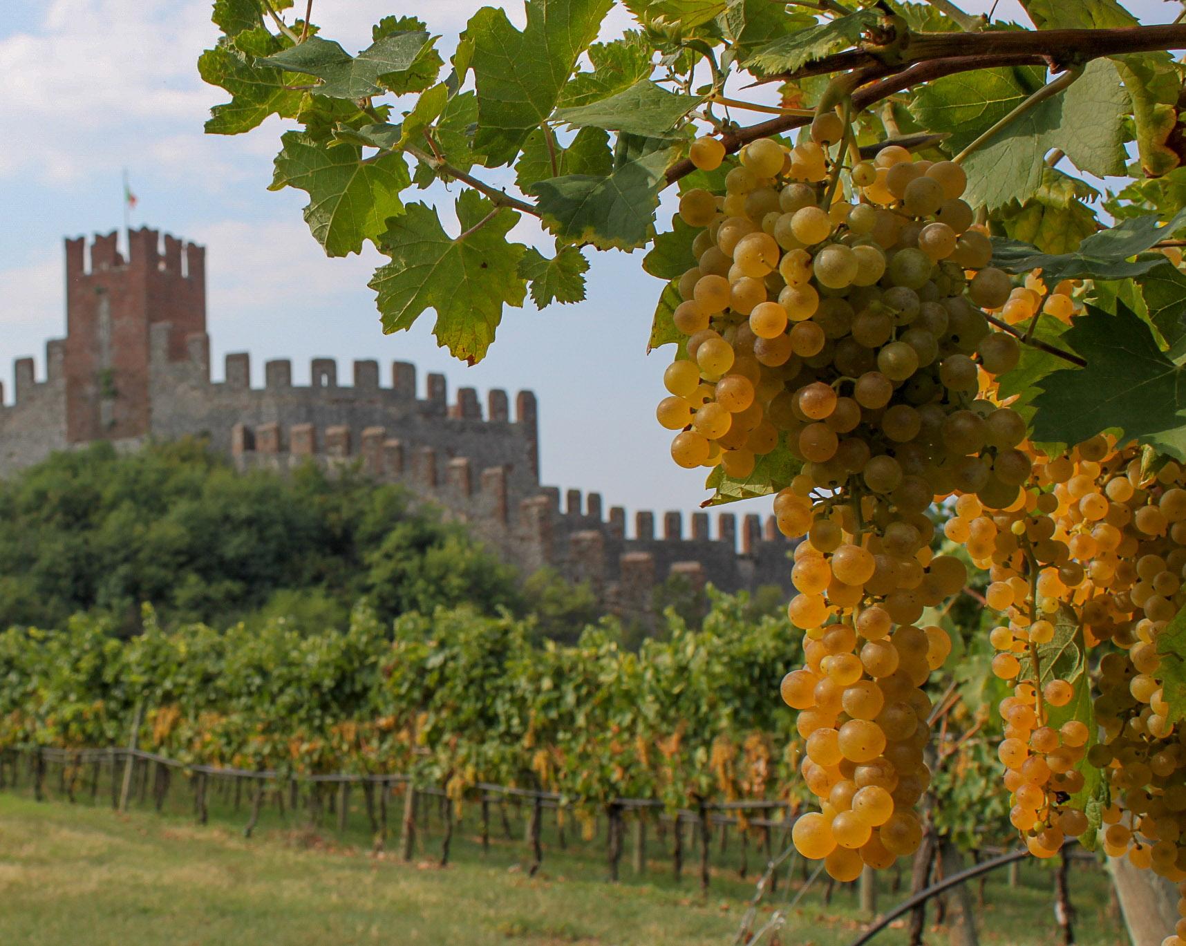 Castello di Soave   ©John Szabo (published by Jacqui Small)