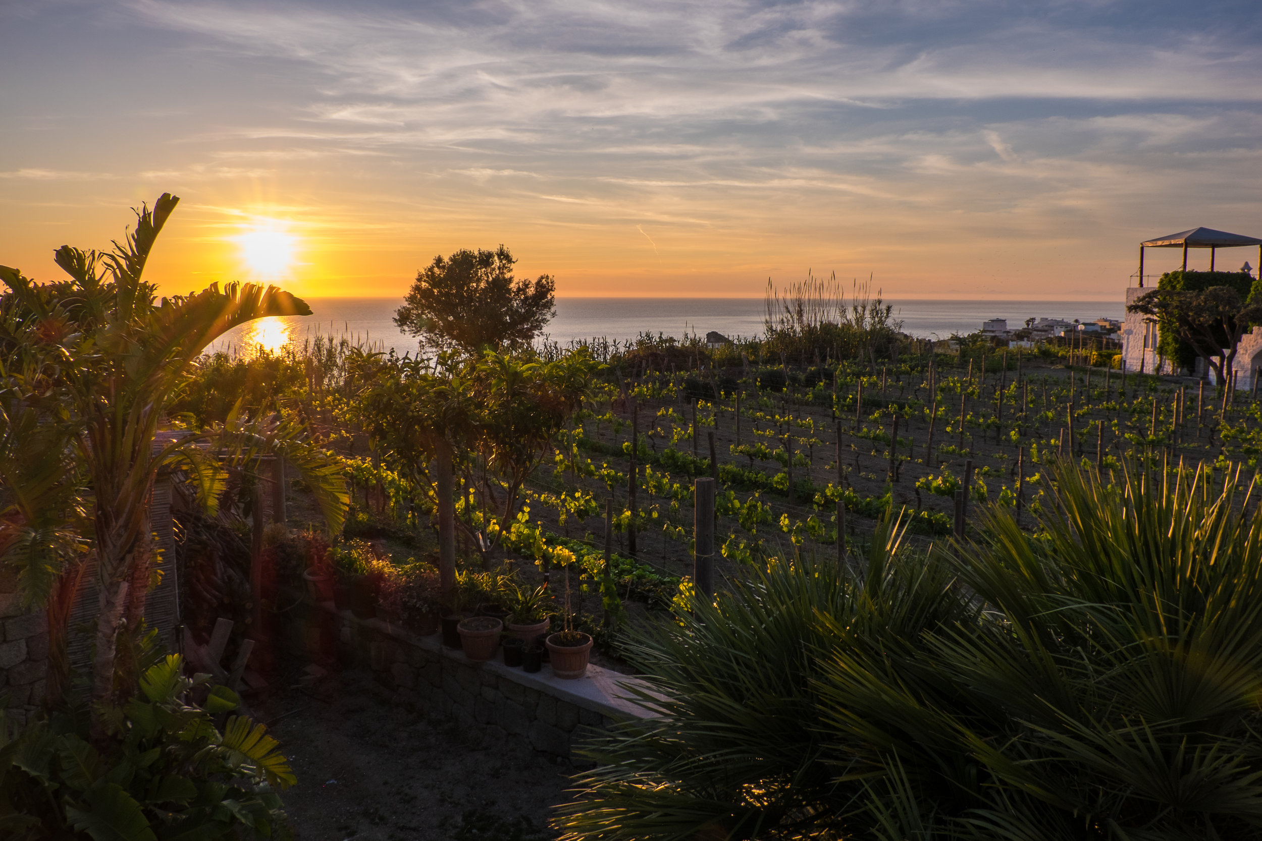 Sunset over vines, Ischia|  ©John Szabo (published by Jacqui Small)