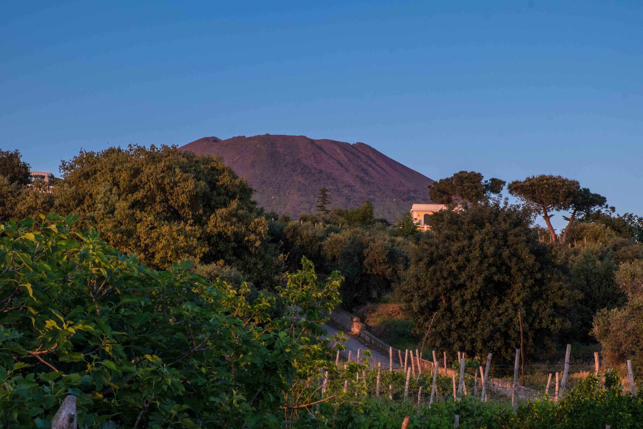 Vesuvius with vineyards in foreground | ©John Szabo (published by Jacqui Small)