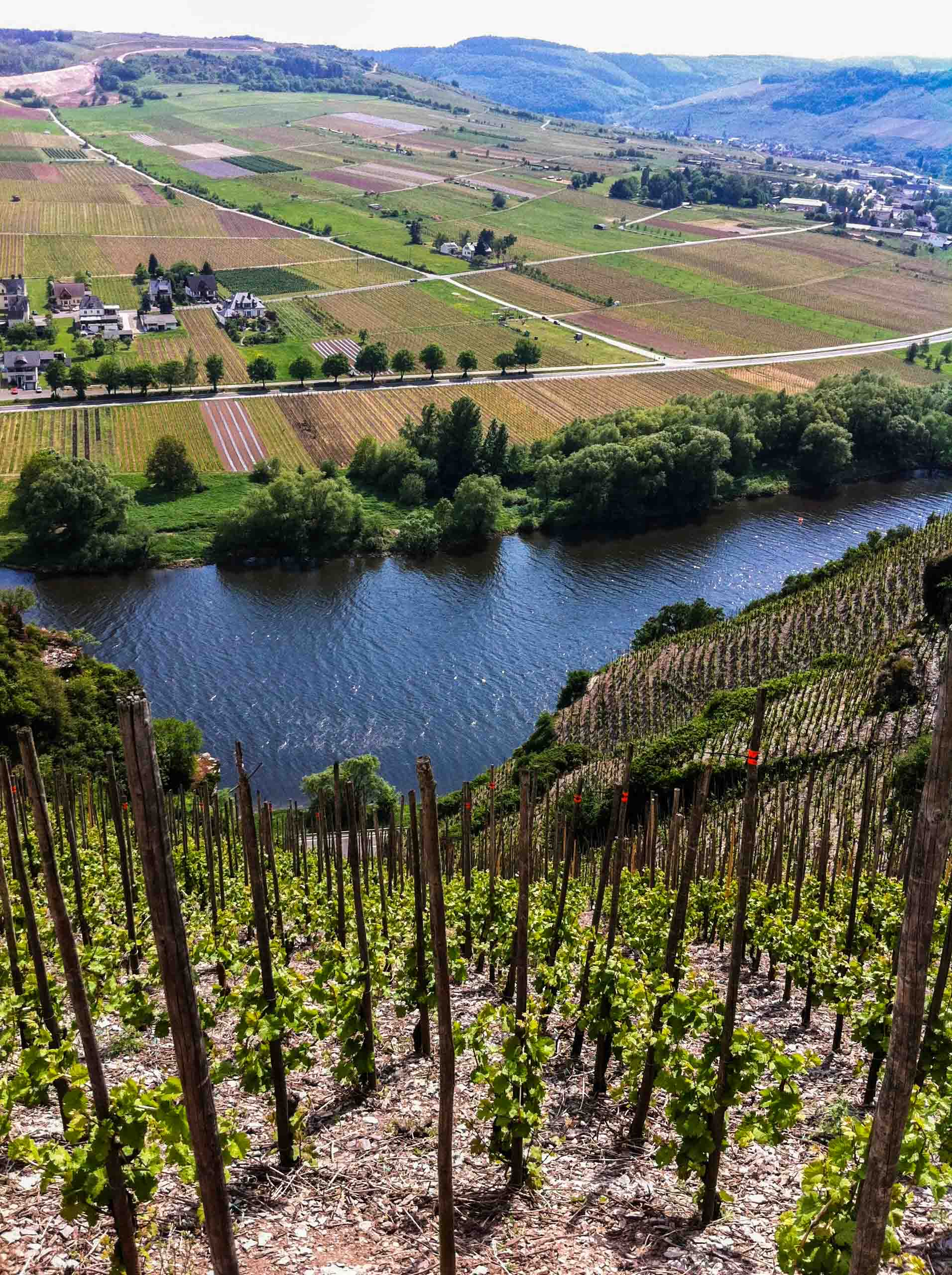 The Würzgarten vineyard-.jpg